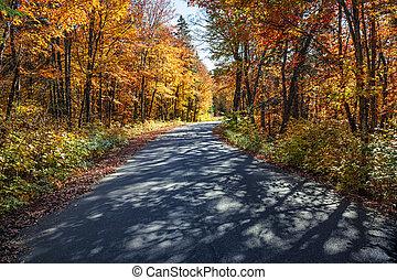út, alatt, bukás, erdő