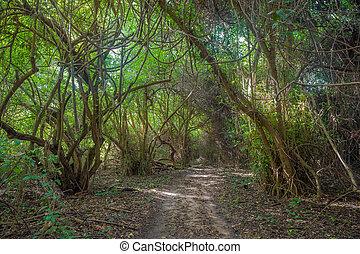 út, alatt, dzsungel, erdő
