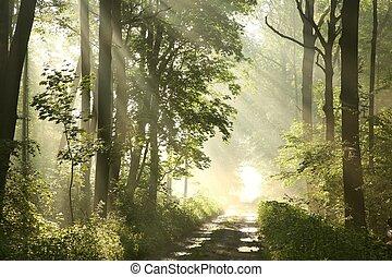 út, alatt, eredet, erdő, -ban, hajnalodik