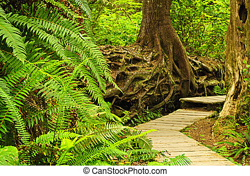 út, alatt, mérsékelt rainforest