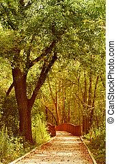 út, erdő, át