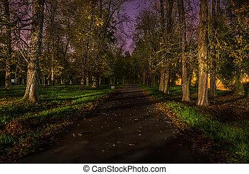 út, erdő, retouched