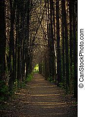 út, este, erdő