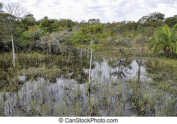 überschwemmt, brasilien, pantanal, wald