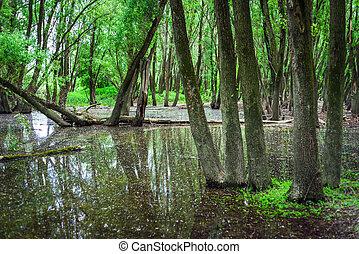 überschwemmt, donau, fluß, slowakei, wälder