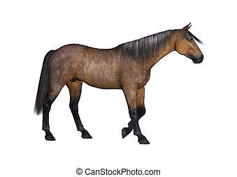 übertragung, pferd, 3d, weißes, bucht