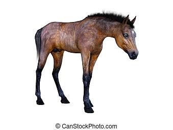 übertragung, pferd, weißes, fohlen, 3d