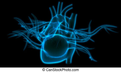 übertragung, system, internes herz, organ, röntgenaufnahme, koerperbau, zirkulierend, 3d, menschliche