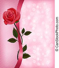 ünnep, háttér, noha, piros rózsa, és, ribbon., valentines, day., vektor