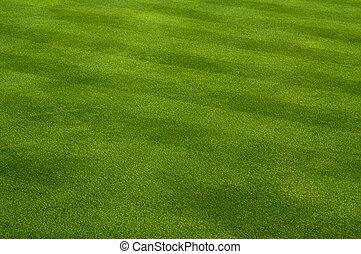 üppig, grünes gras
