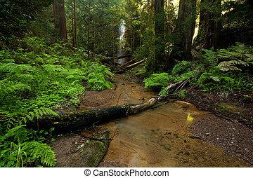 üppig, regenwald, waterfall:, beere, flüßchen, fällt, in, groß, becken, nationalpark, kalifornien