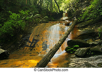 üppig, regenwald, waterfall:, goldenes, kaskade, fällt, in, groß, becken, nationalpark, kalifornien