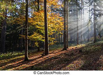 čech, sluneční paprsky, mlha, barvitý, autumn krajina, ráno, mlhavý les, list