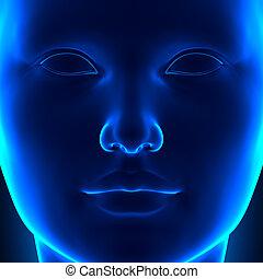 čelo, samičí, hlavička, čelit, anatomie