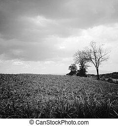 čerň, neposkvrněný, strom, bojiště, hluboký