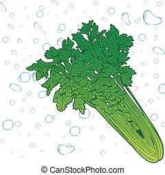 čerstvý, celer