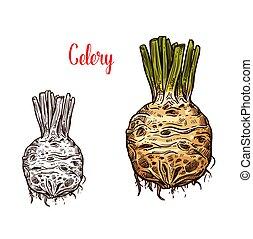 čerstvý, celer vyvrátit z kořene, skica, barva, a, monochróm