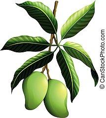 čerstvý, mango, dále, ta, filiálka