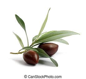 čerstvý, olivové barvy kopyto, filiálka, s, oliva