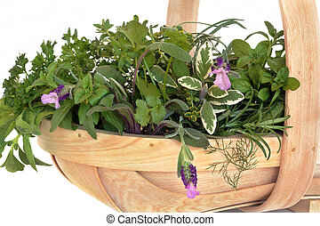 čerstvý, selekce, list, bylina