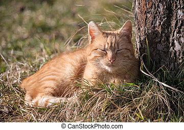 červeň, kočka, lies, pastvina, strom, ostatní