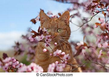 červené šaty květovat, kočka