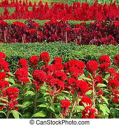 červené šaty květovat