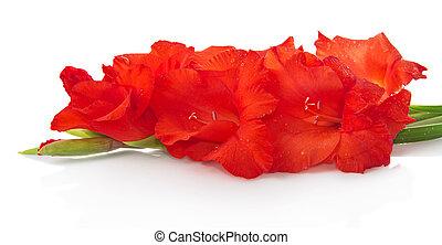 červené šaty květovat, osamocený, oproti neposkvrněný