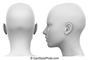 čistý, neposkvrněný, samičí, hlavička, -, stěna, a, zadní strana prohlédnout