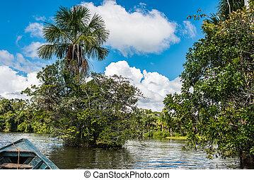 łódka, w, przedimek określony przed rzeczownikami, rzeka, w, przedimek określony przed rzeczownikami, peruwiański, amazon dżungla, na, madre, od, dios, peru