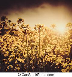 łąka, kasownik, abstrakcyjny, dramatyczny, zachód słońca, w, krajobraz