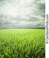 łąka, niebo, dan, światło słoneczne