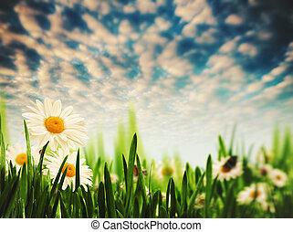 łąka, wieczorny, kasownik, abstrakcyjny zamiar, twój, krajobraz