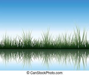 łąka, z, odbicie