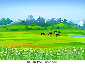 łąki, alpejski