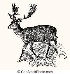 ősi, állatok
