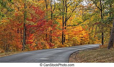ősz, állam, desoto, liget, befest