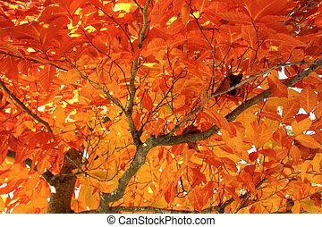 ősz, árnyék