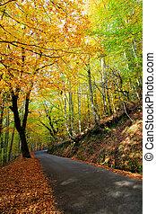 ősz, út