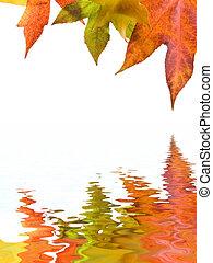 ősz, ősz kilépő