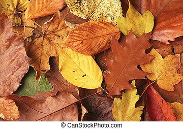 ősz, őt lap