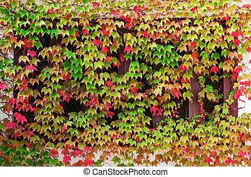 ősz, ablak, felkúszó, berendezés