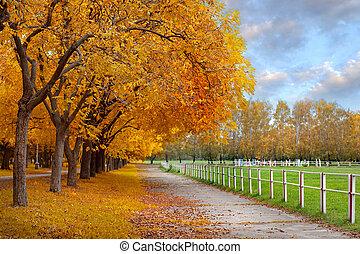 ősz, alatt, egy, liget