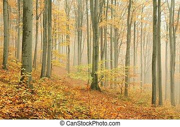 ősz, bükkfa, erdő