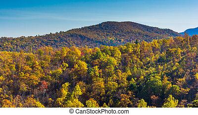 ősz, befest, képben látható, egy, hegyoldal, alatt, shenandoah nemzeti dísztér, virginia.