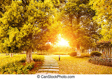 ősz, befest, kína