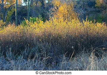 ősz, befest