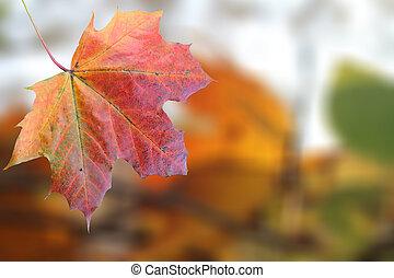 ősz, elhagy