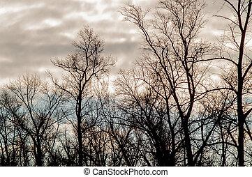 ősz erdő, alatt, a, elesik kilépő