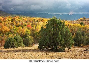 ősz erdő, alatt, mountain.